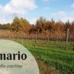 Visita alla cantina Pomario: tradizione e innovazione