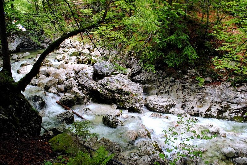 escursione lago di bohinj e cascate savica slovenia (35)