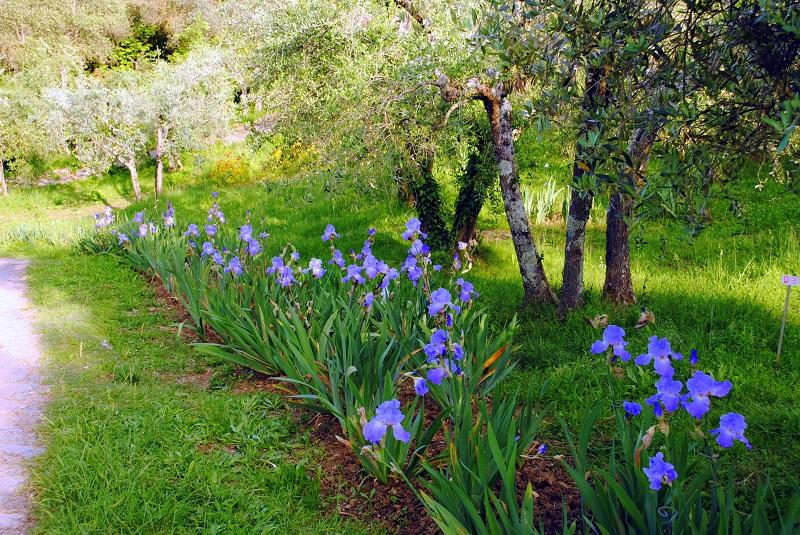 Firenze e la primavera: i giardini in fiore da visitare sempre in